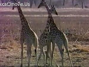 Африканское порно,Натуральные
